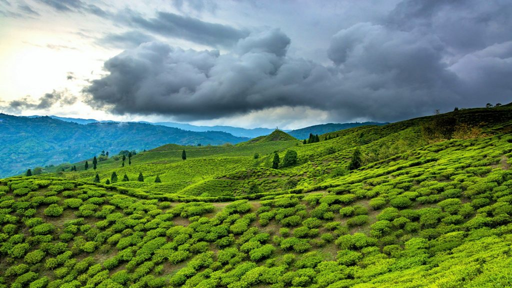 Assam and Meghalaya - Top 10 Holiday Destinations in India
